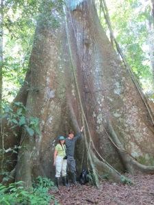 Kapok tree in Manu National Park