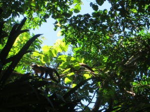 Squirrel monkeys in Manu National Park