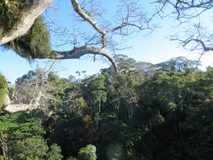 View from the canopy in Manu National Park