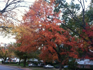Tree turning colors in fall