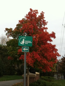 Tree with Millennium Trail sign