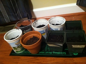 Seeds in starting pots