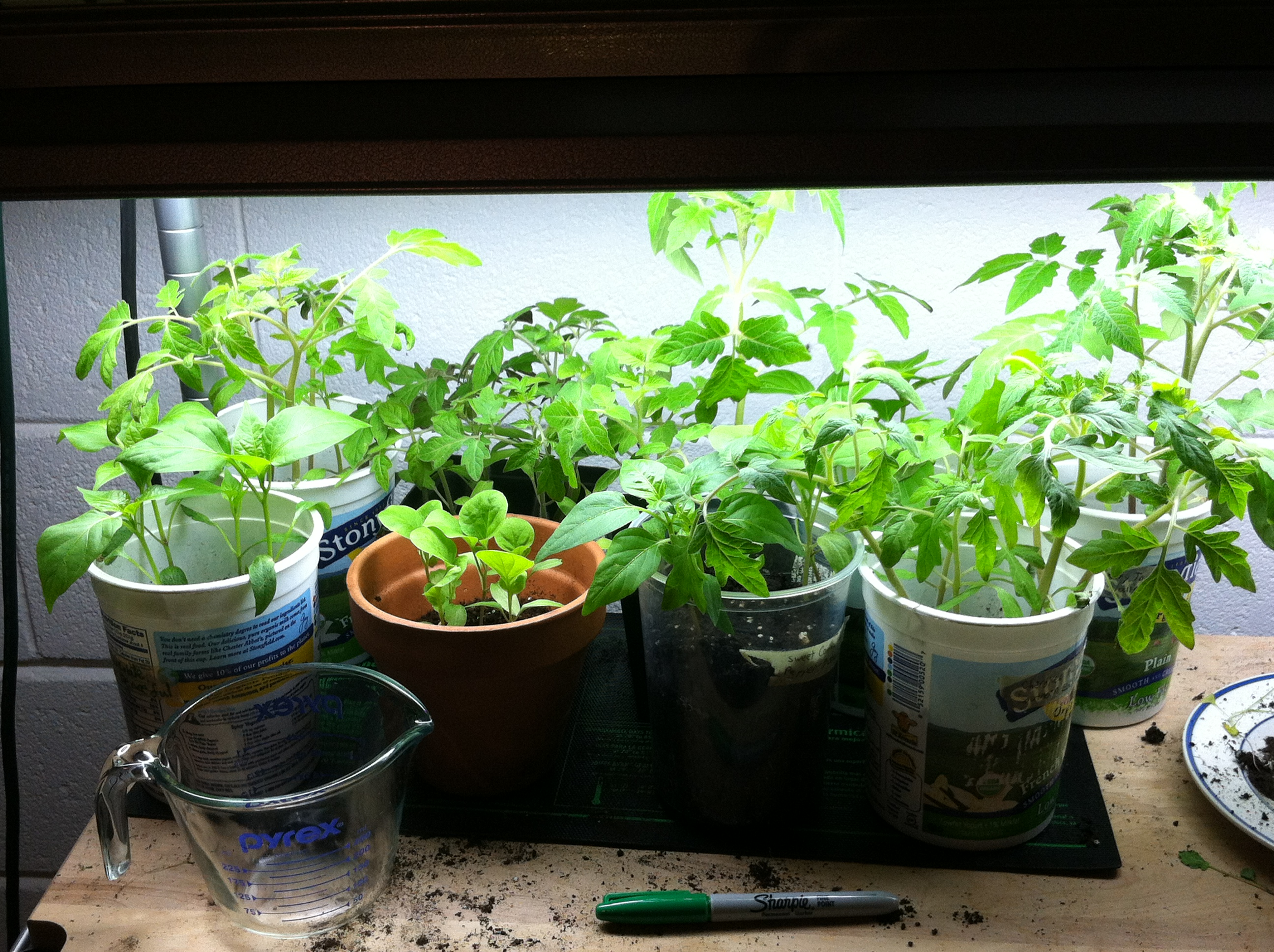 Growing in hope will bike for change or pie for Indoor vegetable gardening tips