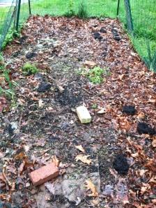 Planting seeds into a lasagna garden